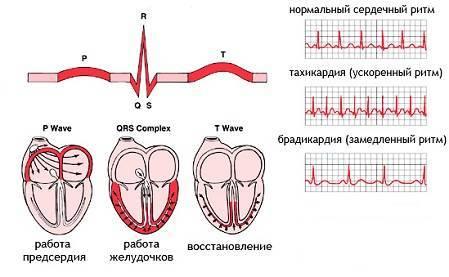 Дыхательная аритмия: причины возникновения, симптоматика и лечебное воздействие