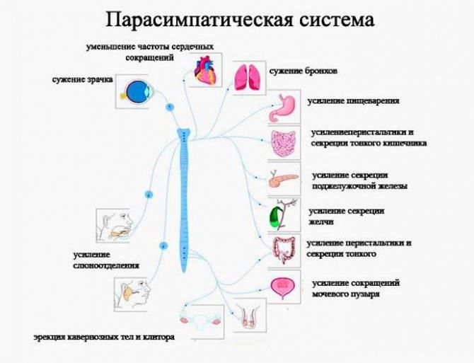 Полная характеристика желудочковой экстрасистолии: симптомы и лечение
