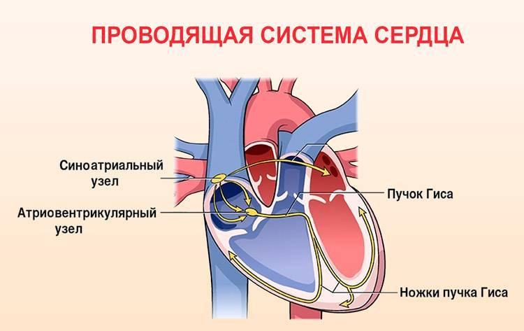 Тахикардия у грудничка симптомы