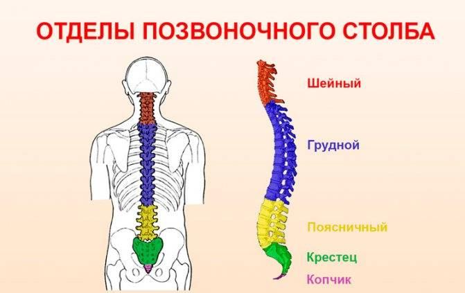 Грудной остеохондроз аритмия