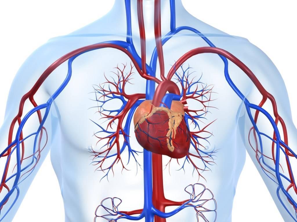 Блокада сердца и армия, блокада сердца ca, av 1 и 2 степени - заберут ли в армию - расписание болезней, призыва.нет