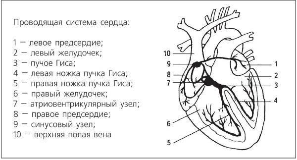 Массаж при аритмии сердца