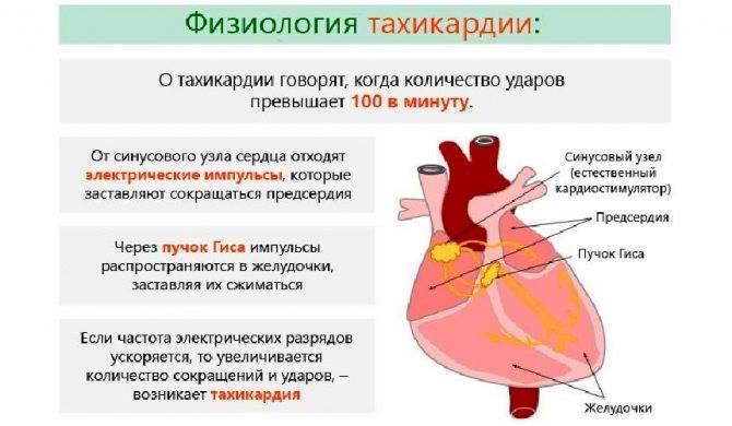 Препараты от брадикардии