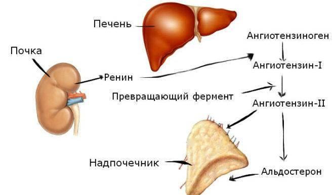 Препараты от учащенного сердцебиения при гипертонии