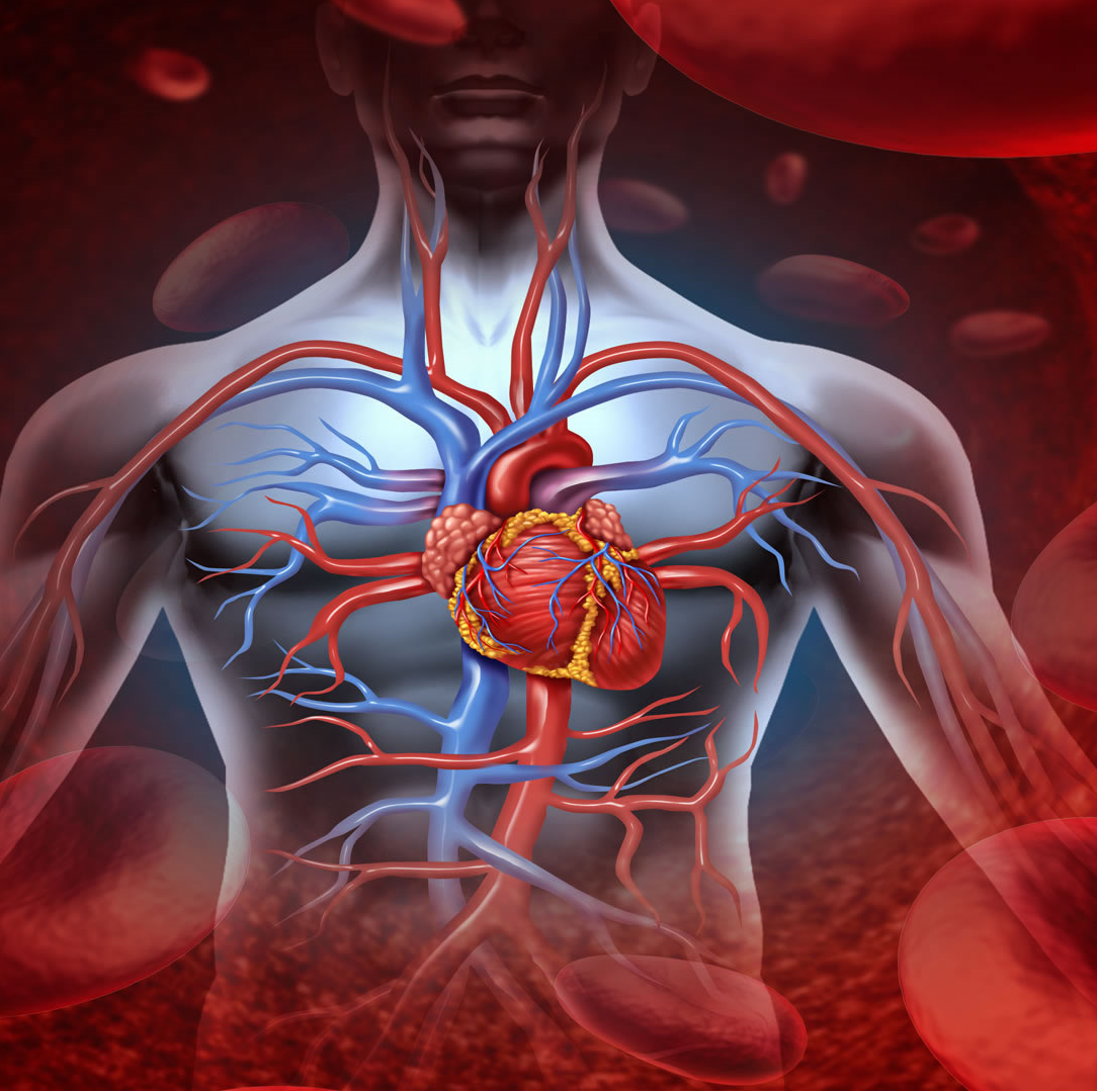 Как лечить аритмию сердца при климаксе