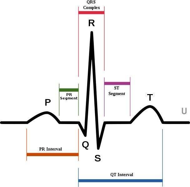 Экстрасистолия желудочковая и наджелудочковая: симптомы, лечение