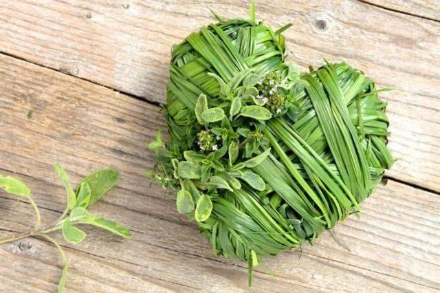 Травы для сердца - какие травы самые эффективные?