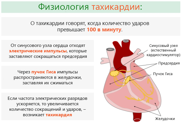 Причины и симптомы тахикардии у женщин