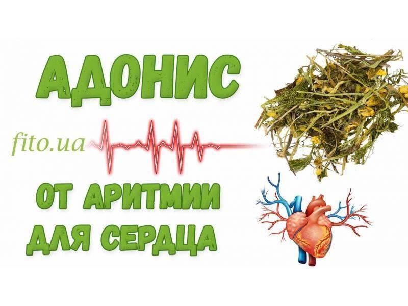 Лечение аритмии народными средствами – 14 рецептов - народная медицина | природушка.ру