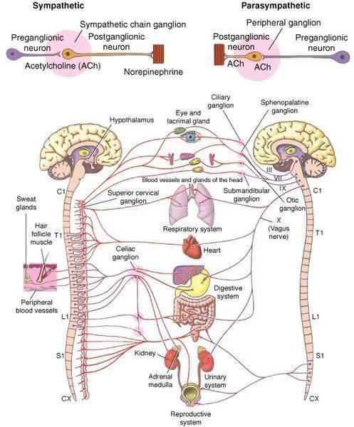 Почему развивается тахикардия на фоне всд и как с ней жить?